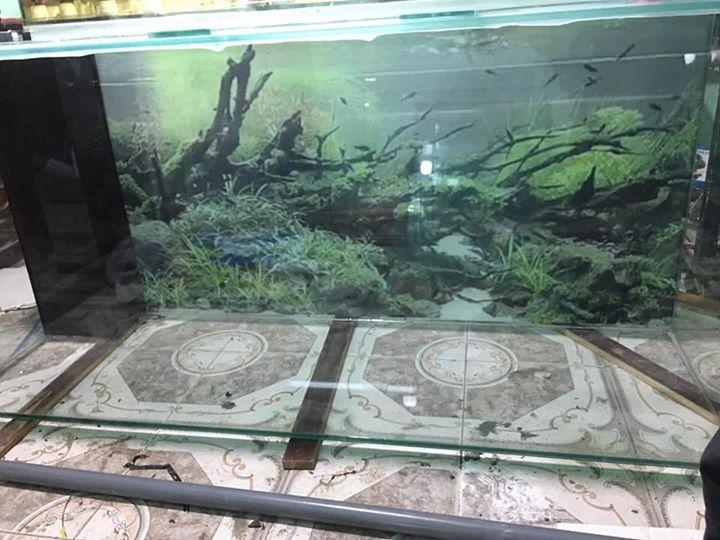 Bể Cá Cảnh